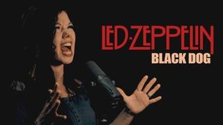 BLACK DOG by Led Zeppelin (Сover by Alla Bulgakova & Alexander Shadrov)