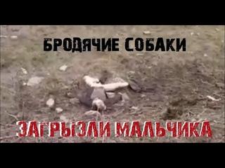 Бродячие собаки загрызли 4 х летнего Мальчика в Башкирии