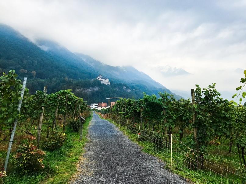Виноградник с видом на замок Вадуц