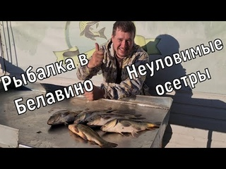 Рыбалка в Белавино. Пытались поймать осетра, но наловили только карпов.