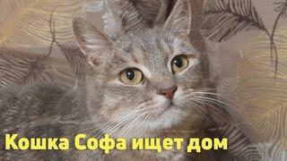 Молодая, красивая, очень ласковая кошка Софочка мечтает о доме и любящем хозяине! Подарите кисе дом!