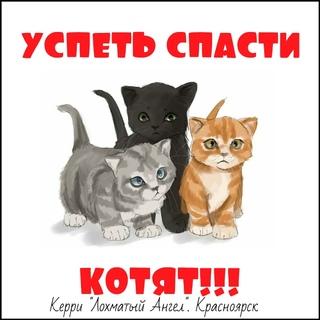 алексеевич спасите котенка картинка лестничной площадке, семи