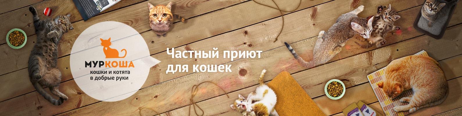 стихотворений для кошки а добрые руки зимние шины