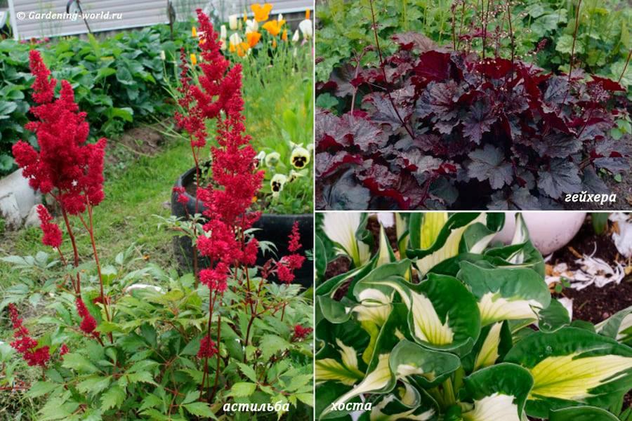 Правила создания цветника: растения с декоративными листьями.