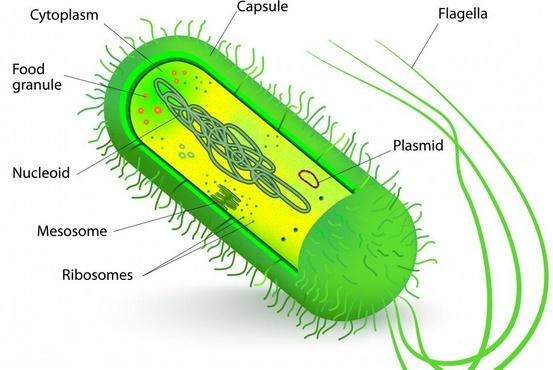 Бактерия - это одноклеточный микроорганизм, представляющий одну из самых основных и примитивных форм жизни.