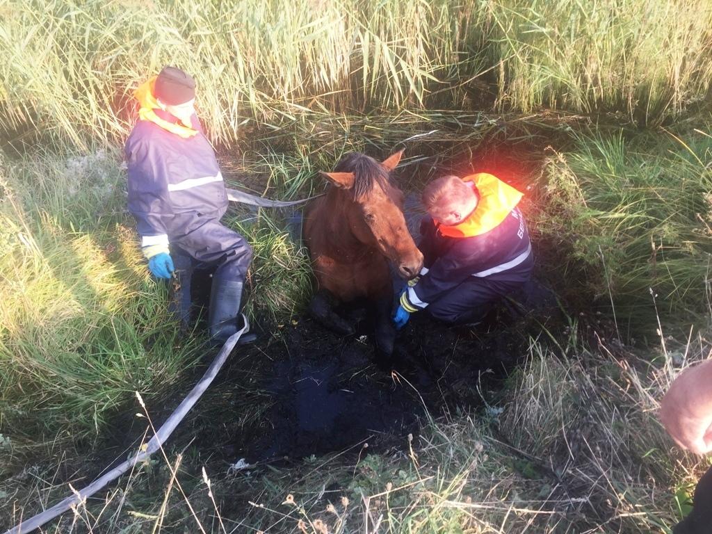 Спасатели в одной из деревень Лидского района помогли спасти лошадь.