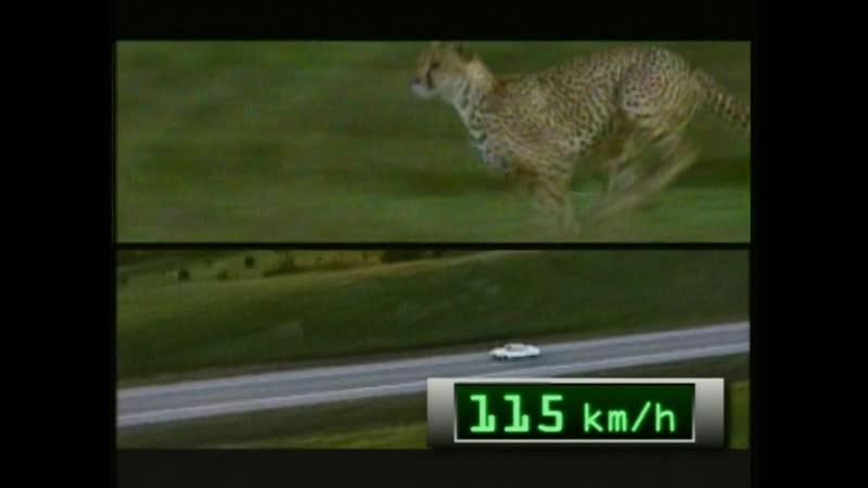 Скорость смертельное оружие Killer Instincts Speed 2004