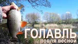 Отличная рыбалка на голавля! Секреты ловли весной!