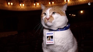 Главный гость легендарного крымского театра: кот Мостик на генеральной репетиции спектакля