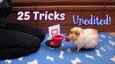 25 Guinea Pig Tricks All At Once Unedited