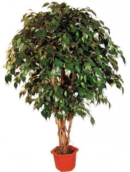 7 ЛУЧШИХ РАСТЕНИЙ ДЛЯ ОЧИСТКИ ВОЗДУХА ВНУТРИ ПОМЕЩЕНИЯ 1. Шеффлера (Schéfflera или Зонтичное дерево) буквально создана для помещений, в которых курят. Она прекрасно «усваивает» и нейтрализует