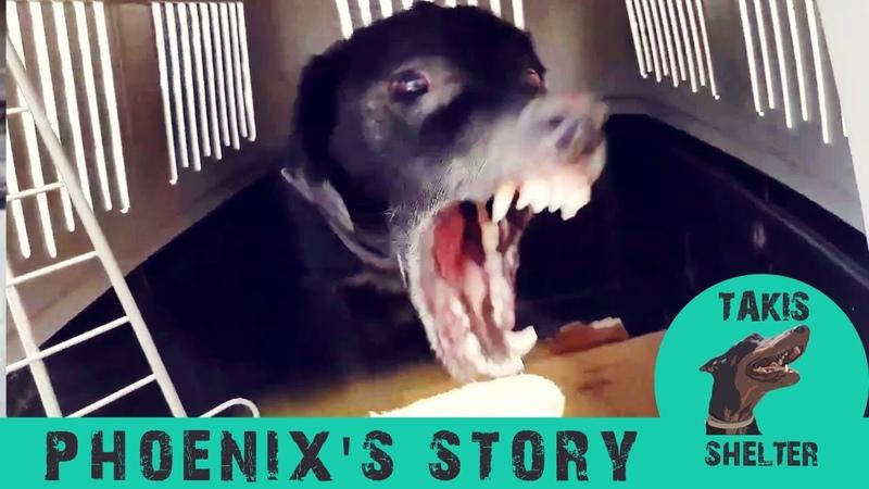 Агрессивный пёс впервые чувствует ласку и любовь после спасения от жестокого хозяина