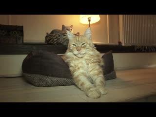 Каждая бездомная кошка имеет право на новую жизнь - считают в Котокафе.