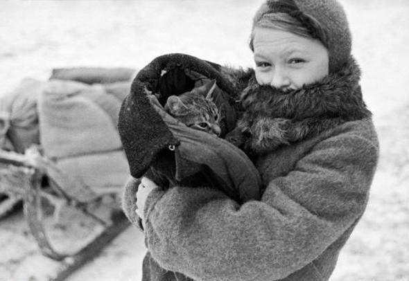Кошки герои блокадного Ленинграда Люди, которым в 1942 году удалось пережить Ленинградскую блокаду, вспоминают, что в то время в городе не стало кошек, зато количество крыс возросло в десятки