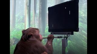 Обезьяна играет в компьютерную игру мозгом