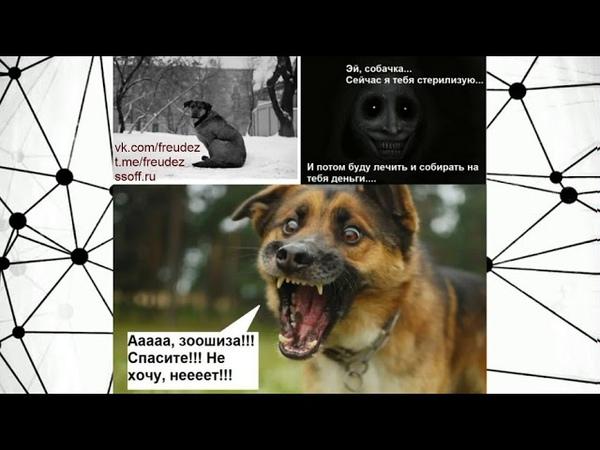 Зоошиза крадет и стерилизует породистых собак Чибисов бомбит