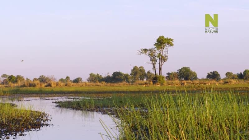 Бескрайняя Африка Дельта Окаванго
