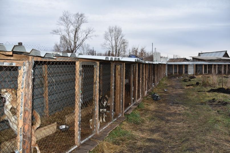 Вольеры для собак в поселке Черта