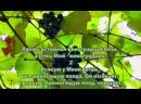 Я есмь истинная виноградная лоза а вы ветви ЕвИоанна глава15