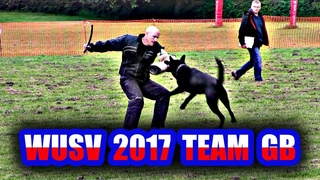 WUSV IPO 2017 Team GB Selection Trial Schutzhund Protection Defence GSD Dog compilation GSDL BAGSD