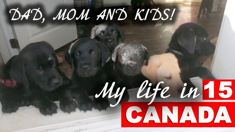 Happy family dad mom and ten funny puppies