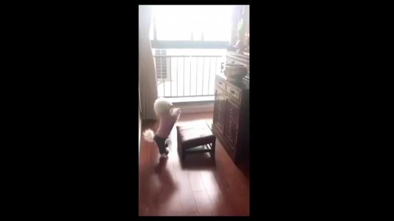 Собака молица