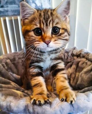 А у этого котика
