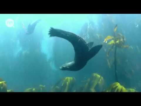 Жизнь в полосе прибоя Дикая природа побережья Африки Документальный фильм Nat Geo Wild