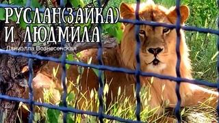 💕Лев РУСЛАН(Зайка) и львица ЛЮДМИЛА-Мила.Gentle relationship of lions. Тайган. Life of .