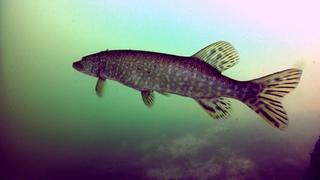 Биотопы Цюрихского озера (Западная Европа, Альпы, бассейн реки Лиммат, Швейцария)