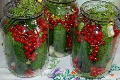 15 лучших рецептов огурцов на зиму