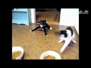 накурил кота урюрюрюрю...=)Dub-Step