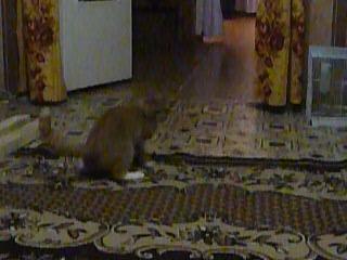 Рыжий волчок. Деревенский кот бабушки Тани.