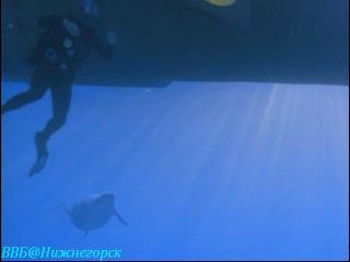 BBC Прогулки с морскими чудовищами 2 серия Документальный 2003