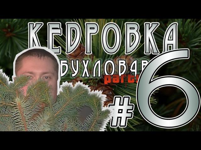 Кедровый орех Кедровка от Бухловара