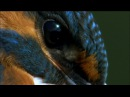 The Kingfisher Hunts in River Shannon | Ireland's Wild River | PBS