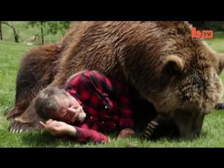Хомяк стал взрослым !! домашний гризли (wrestling a grizzly bear in my garden)