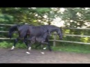 Summersby filly by SEZUAN x Sandro Hit x Donnerhall