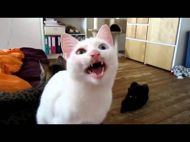Кот радист Азбука Морзе ™