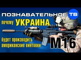 Почему Украина будет производить американские винтовки M16? (Познавательное ТВ, А...