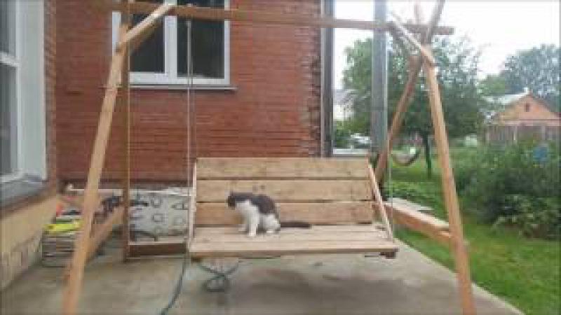 А я лягу прилягу Веселые короткометражные истории из жизни котика Мосика