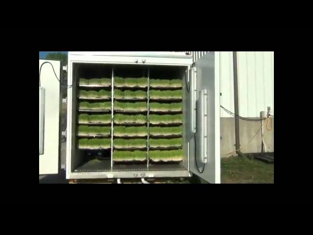 Живой фураж Гидропонный Зеленый корм