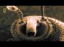 Чудесный Мир насекомых Документальный фильм National Geographic Наши невидимые спутники