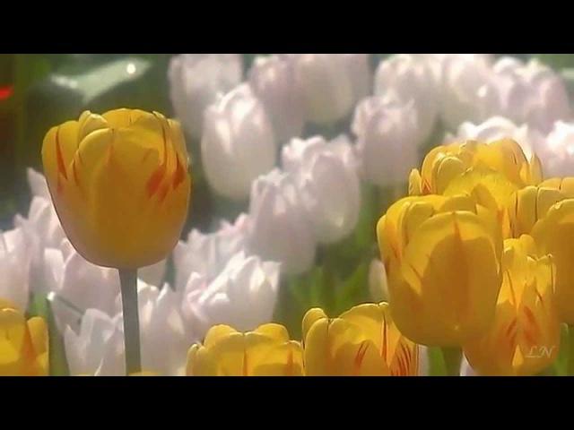 Весна и Оркестр Поля Мориа, История любви- Френсис Лей