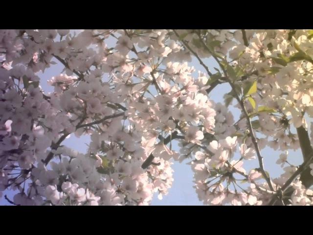 ♥ Ƹ̵̡Ӝ̵̨̄Ʒ ♥ Dawn of Spring E. DOGA -Sonnet ♥ Ƹ̵̡Ӝ̵̨̄Ʒ ♥