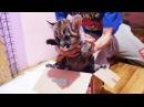 РАСПАКОВКА ГОРНОГО ЛЬВА Первый день котёнка пумы в новой семье Cougar kitten's first day