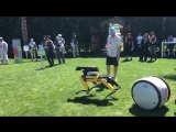 MARS 2018 Spot-mini (Boston Dynamics), Gitta (Piaggio) и дрон
