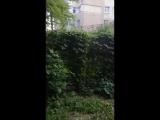 Некроз(демо)