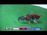 Pelea #2 Traba AnA Vs PALITO DE COCO 1606198 - Club Canca