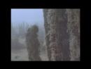BBC «Дикая Южная Америка (1). Затерянные миры» (Документальный, природа, животные, 2000)